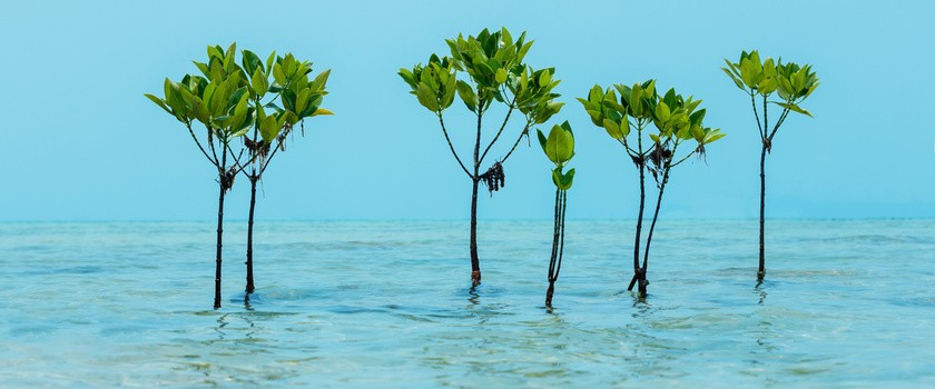 Ekstrakt z egzotycznej rośliny może wspomóc walkę z cukrzycą