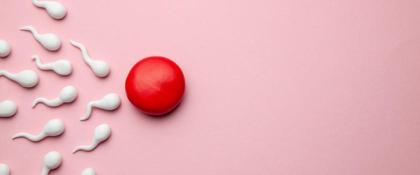 Jajeczko kobiety selekcjonuje plemniki, które mogą je zapłodnić