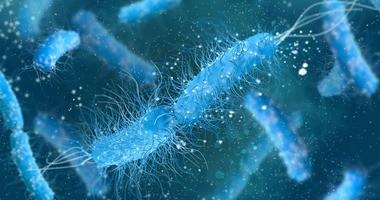 Escherichia coli (pałeczka okrężnicy) – co to za bakteria?
