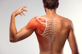 Mięsień nadgrzebieniowy – przyczyny, objawy, leczenie uszkodzenia mięśnia nadgrzebieniowego. Rehabilitacja i ćwiczenia w domu
