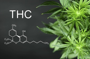 THC a zdrowie – dlaczego tetrahydrokannabinol jest niebezpieczny?