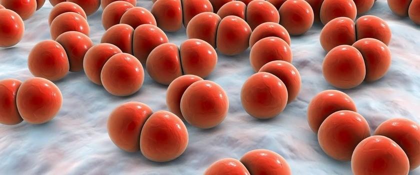 Pneumokoki – czym są i jakie choroby wywołują? Jak chronić się przed pneumokokami?