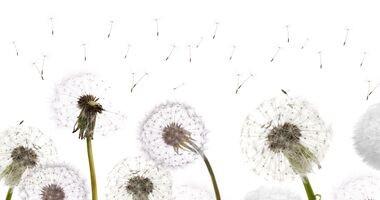 Podstępny atak pyłków