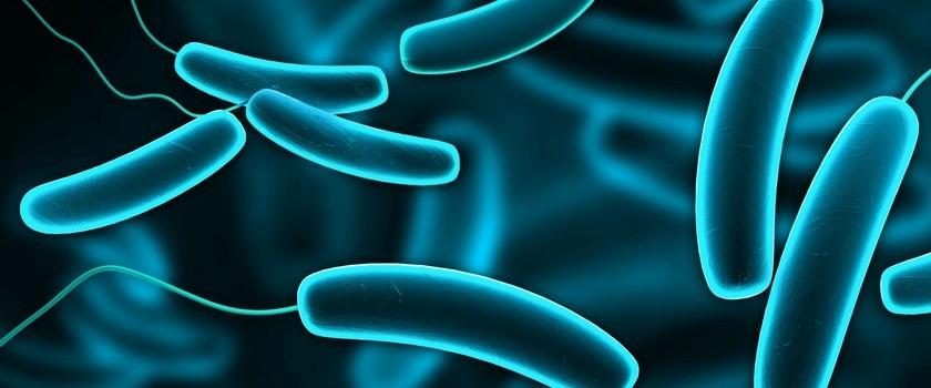 E. coli -  uchroń się przed zakażeniem pałeczką okrężnicy