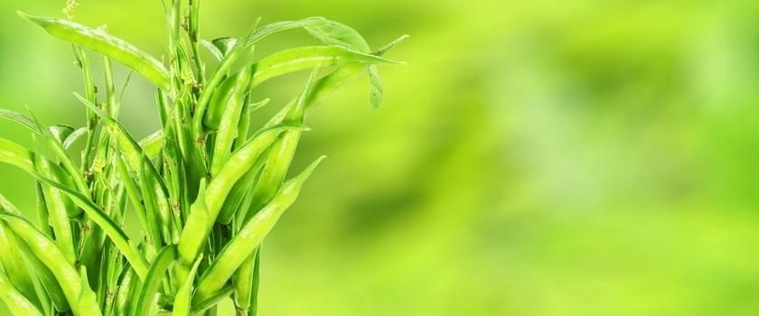 Guma guar (E412) – właściwości, zastosowanie i szkodliwość. Jak używać gumę guar?
