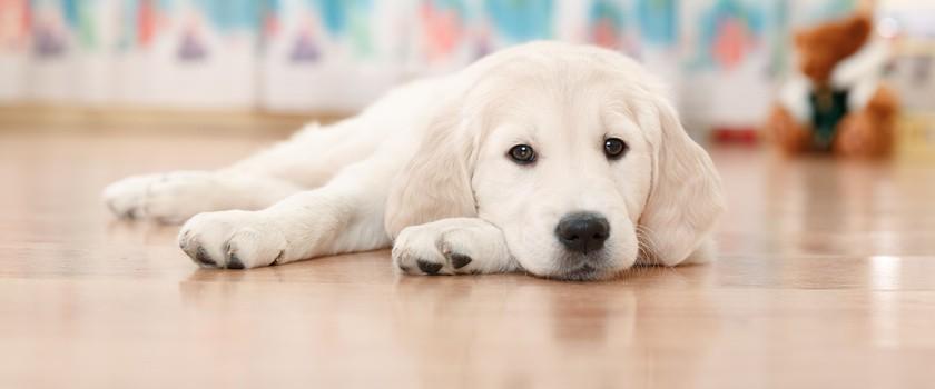 Kontakt ze zwierzętami poprawia ludzką kondycję psychiczną