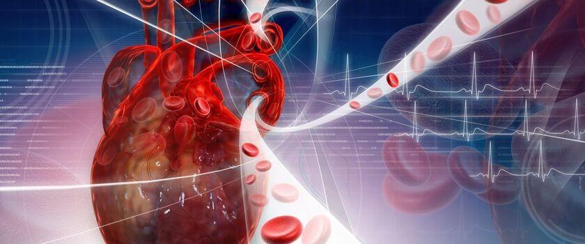 Anatomia serca i układu krwionośnego