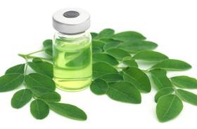 Olej Moringa – zastosowanie w kuchni i farmakologiczne