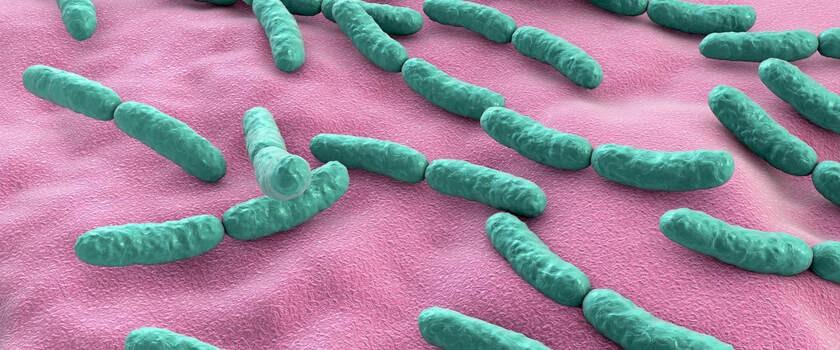 Bakterie jelitowe i ich rola w odbudowie odporności