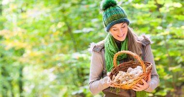 Przegląd grzybów: właściwości zdrowotne i pierwsze kroki w grzybobraniu
