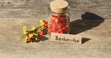 """Berberys – """"polska cytryna"""" – właściwości lecznice i zastosowanie"""