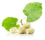 Encyklopedia ziół - Morwa biała /  Morus alba , morwa biała owoc