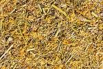 Encyklopedia ziół - Nostrzyk żółty (Nostrzyk lekarski, Nostrzyk zwyczajny) /  Melilotus officinalis , Nostrzyk żółty