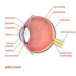 Encyklopedia zdrowia - Gałka oczna, oko /
