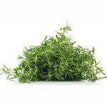 Encyklopedia ziół - Tymianek pospolity (Tymianek ogrodowy, Tymianek prawdziwy) /  Thymus vulgaris , Tymianek pospolity