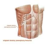 Mięsień skośny zewnętrzny brzucha